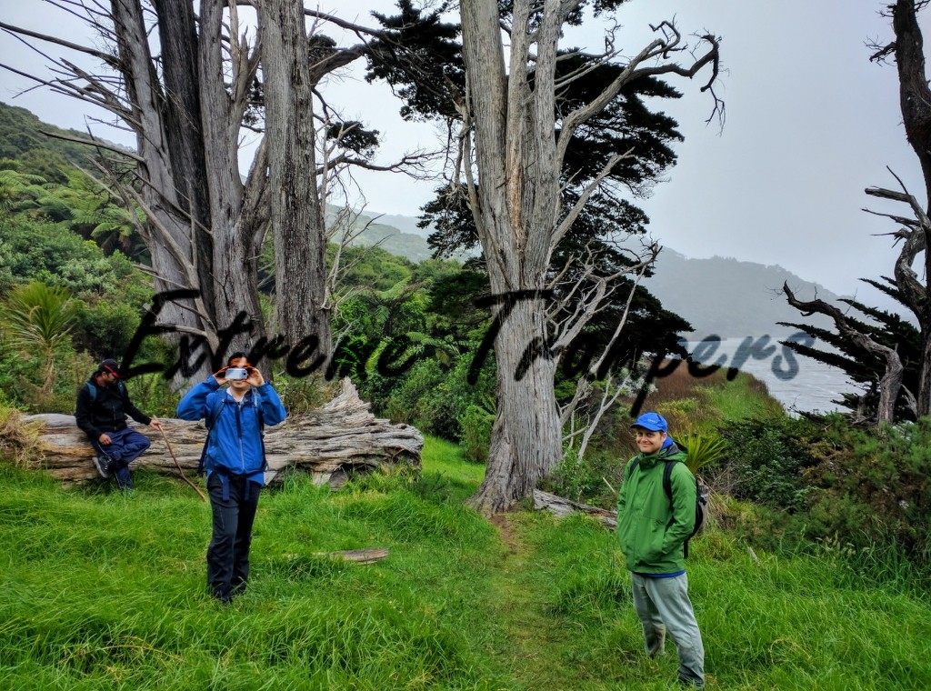treegate